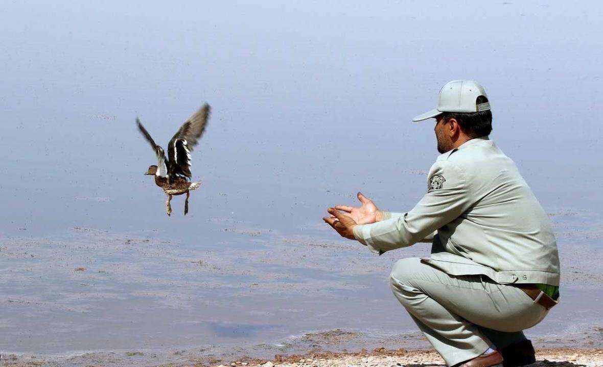 خبرنگاران 20 قطعه پرنده وحشی در زیستگاه های دهگلان رها سازی شد