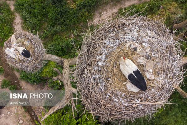 (تصاویر) باغ لک لک های دزفول
