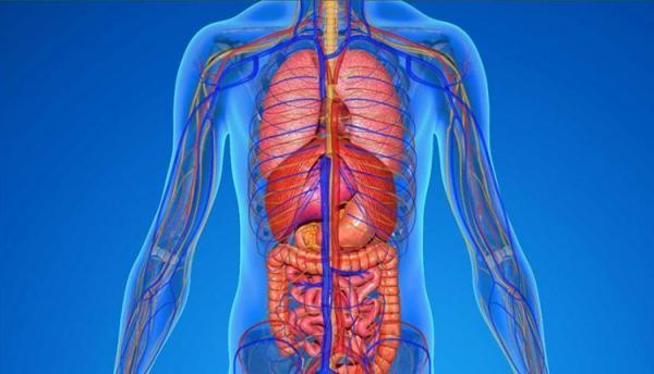 10 حقیقت جالب درباره بدن انسان